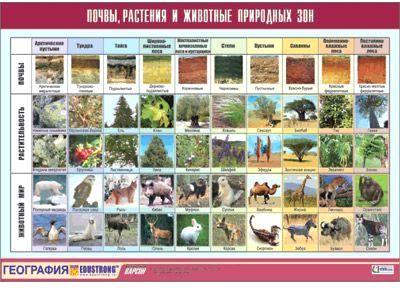 Животные природных зон винил 100x140